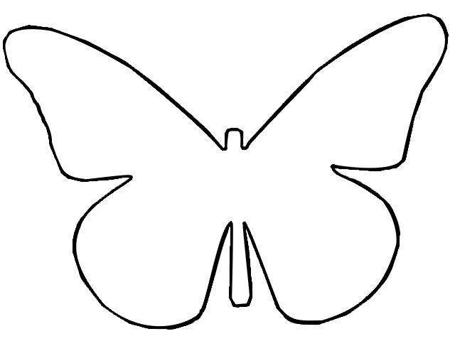 640x480 Butterfly Outline Butterflies