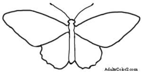 600x310 Butterfly Outline Or Silhouette Basic Shapes 3