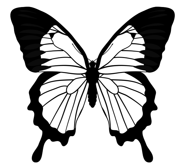 600x547 Drawn Butterfly Outline