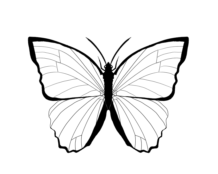 900x721 Outline Of Butterfly Many Interesting Cliparts