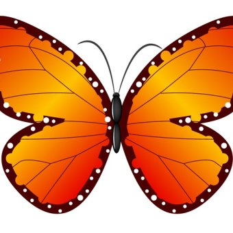 340x340 22 Butterfly Outline Clipart Vectors Download Free Vector Art
