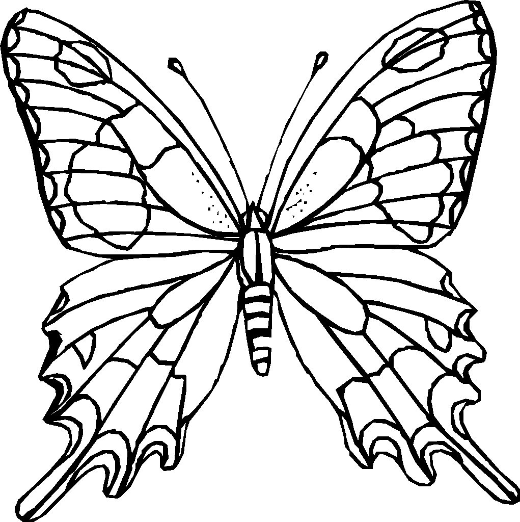 1021x1024 Outline Drawing Of Butterfly Butterfly Net Drawing Clipart Panda