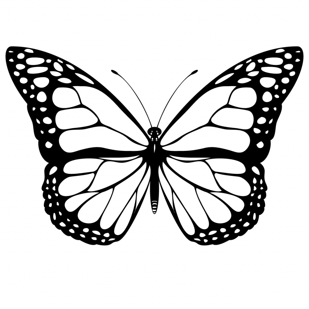 1024x1024 Butterfly Outline Drawing 1000 Images About Zentangle Outlines
