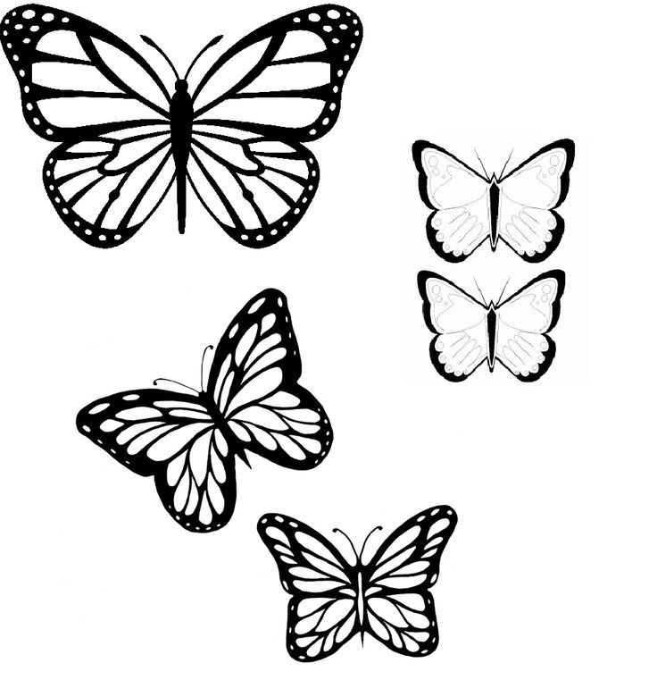 736x761 Butterfly Outlines