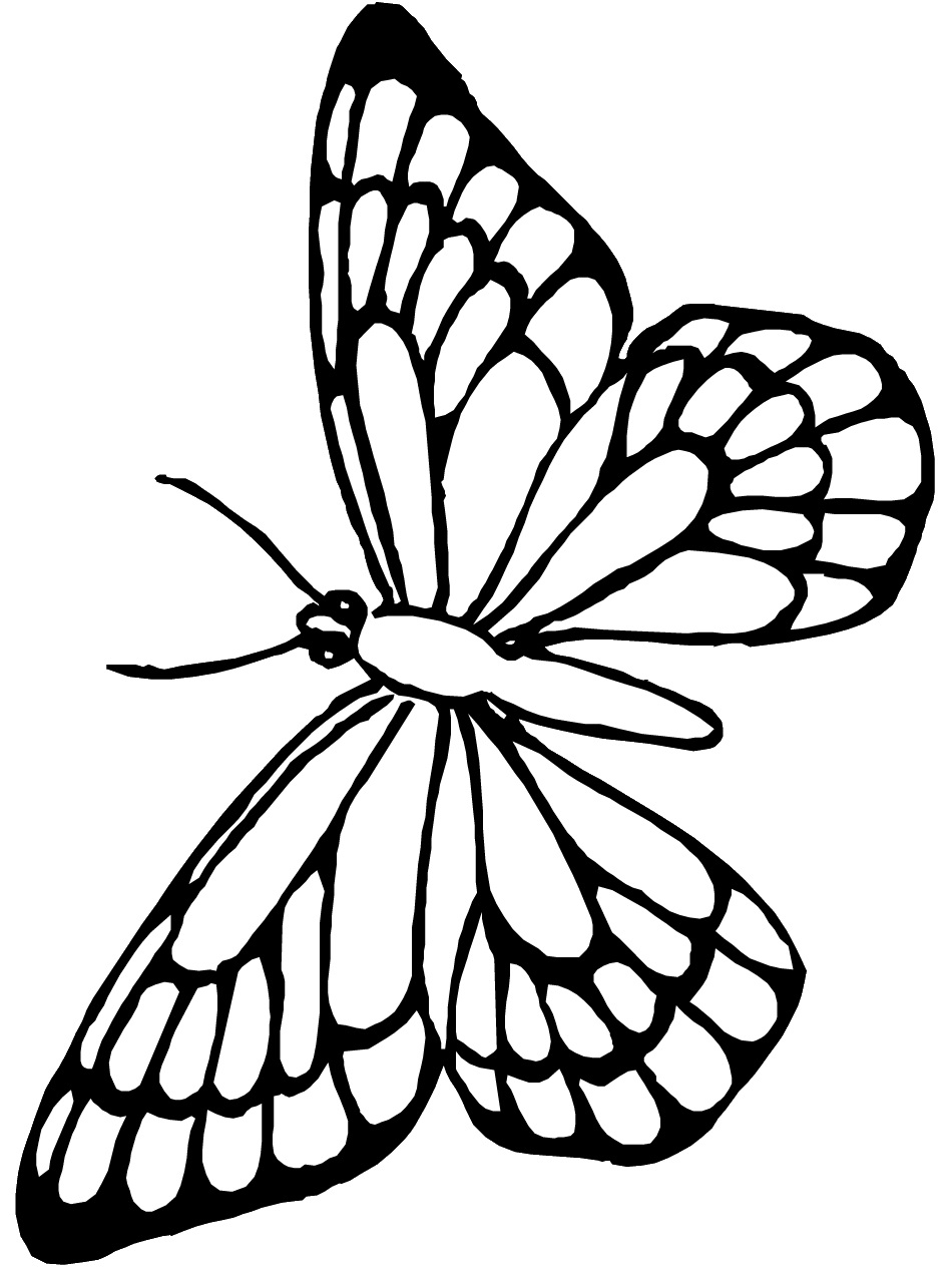 950x1266 Monarch Butterfly Outline
