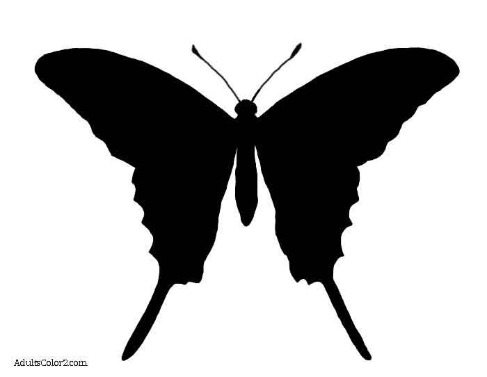 700x542 The 25+ best Butterfly outline ideas Felt butterfly
