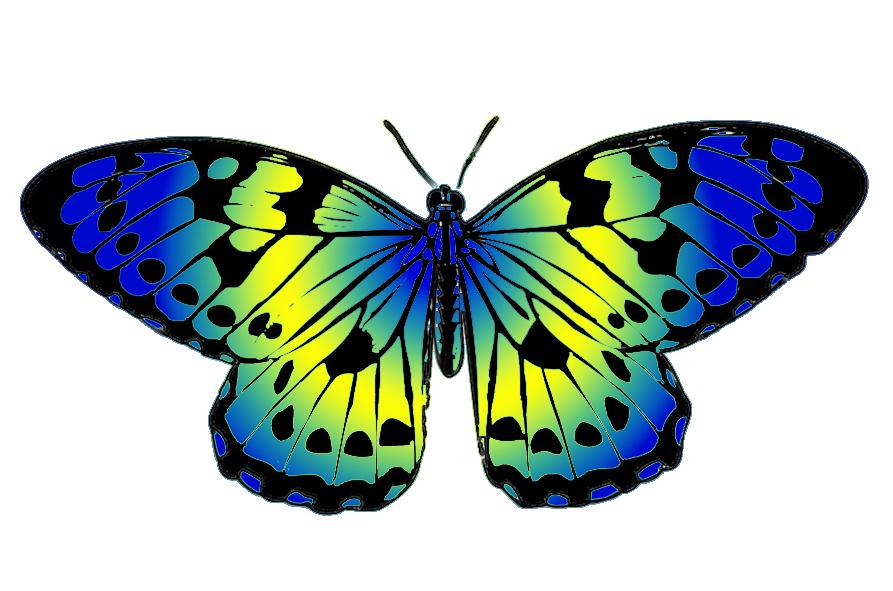 893x591 Butterfly Clip Art 3