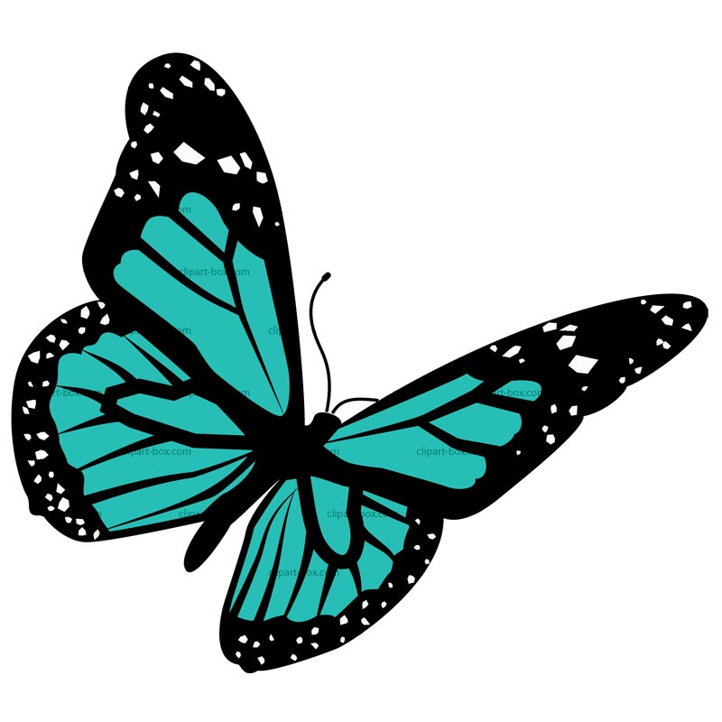 800x800 Butterfly Clipart Real