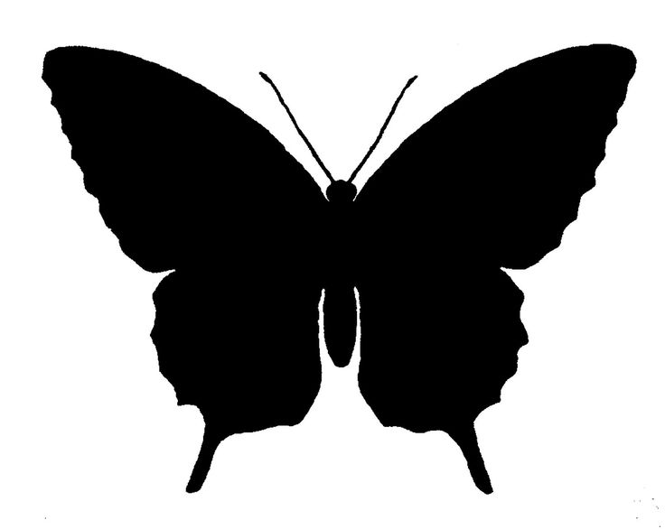 736x586 29 Best Butterfly Silhouettes Images Drawings, 15