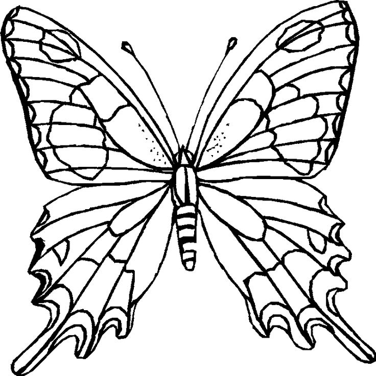 736x737 Best Printable Butterfly Ideas Butterfly