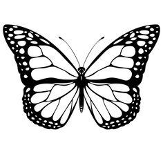 236x236 Tusiphone Abeona Butterflies Butterfly, Moth