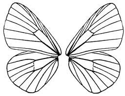 256x197 51 Best Butterfly Wings Images Aqua, Blue Butterfly