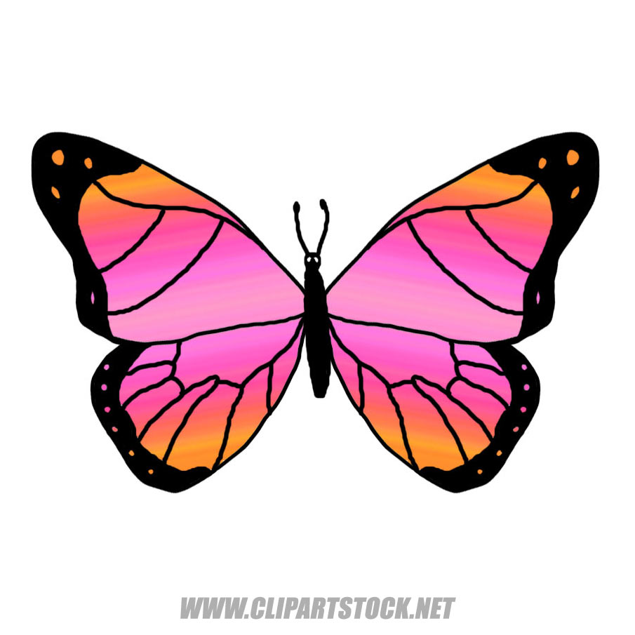 905x905 Butterfly Clipart Peach