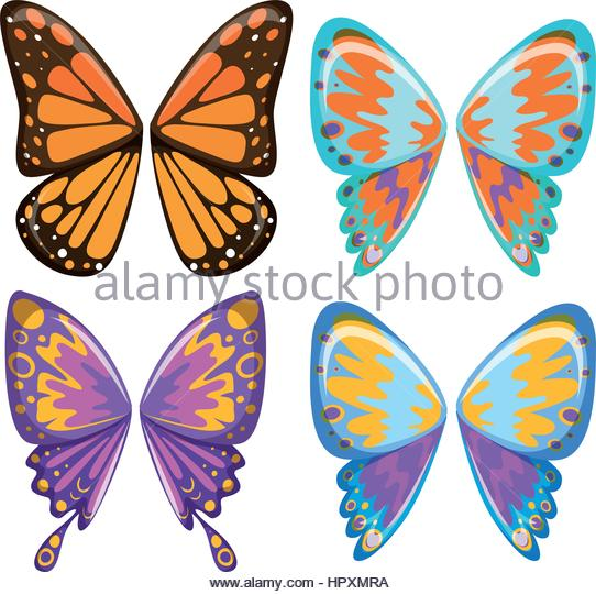 542x540 Butterfly Wings Stock Vector Images