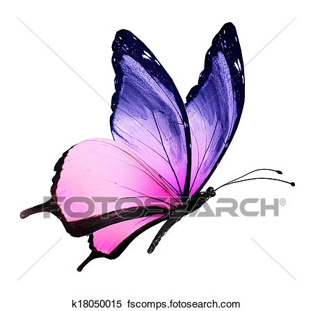 450x447 Butterfly Wings Illustrations And Clip Art. 32,012 Butterfly Wings