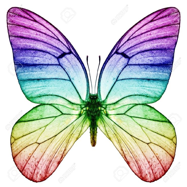 736x736 112 Best Everything Butterflies Images Butterflies