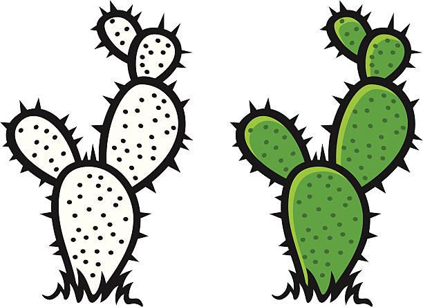 612x444 Cactus clipart vector