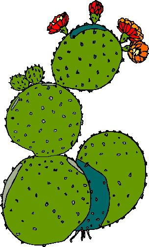 304x505 Cactus Border Clipart Kid