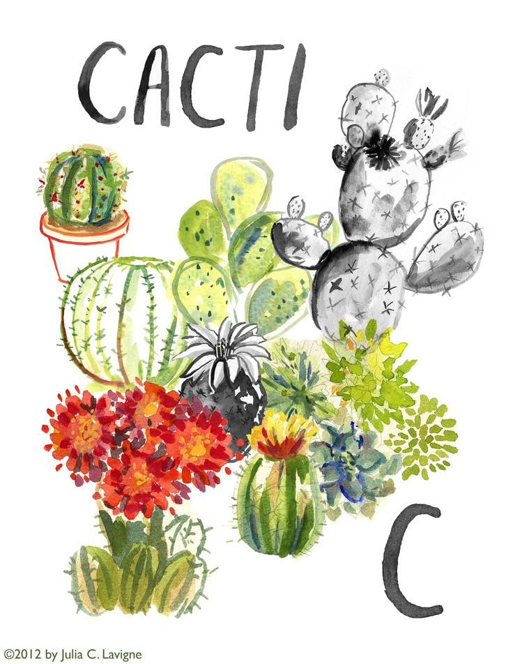 cactus flower clipart on clipartmag