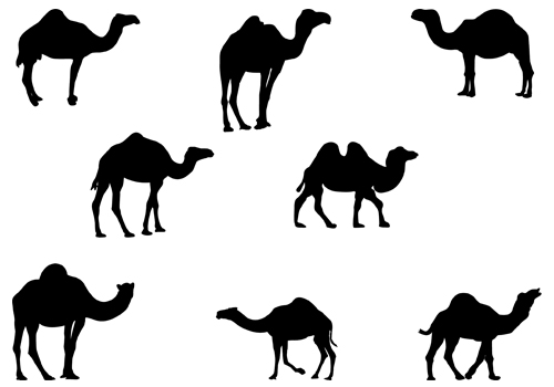 500x350 Camels Silhouette