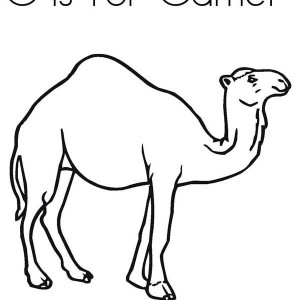 300x300 A Man Riding Camel Coloring Page A Man Riding Camel Coloring Page