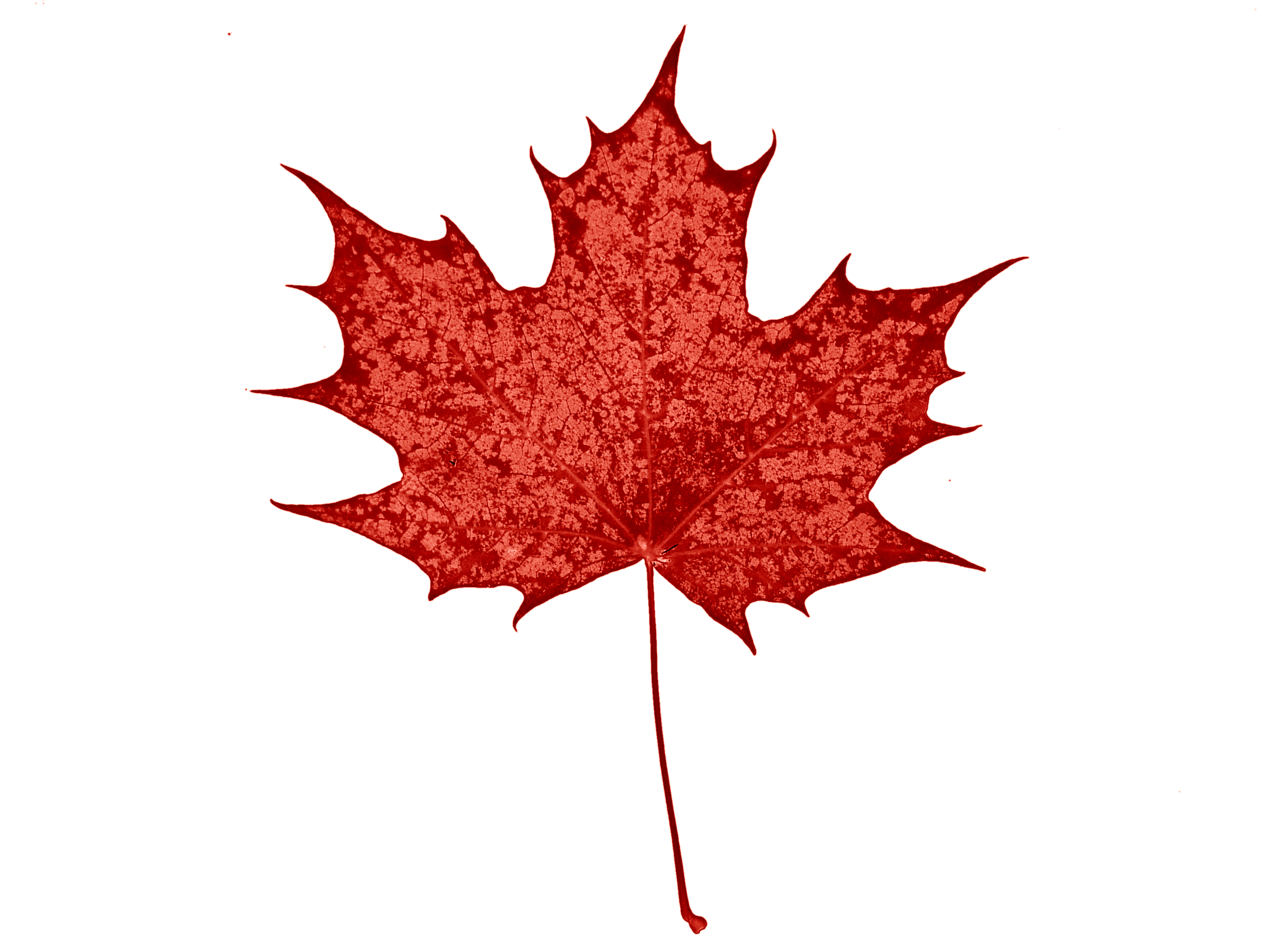 2848x2136 Canadian Maple Leaf Clipart 2207290