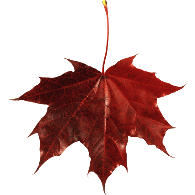 400x400 Canadian Maple Leaf With Shadow Transparent Png