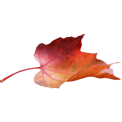 400x400 Canadian Maple Leaf Transparent Png