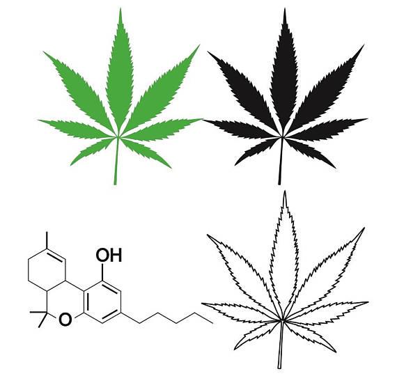 570x540 Cannabis Leaf W Thc Molecule Clip Art Marijuana Leaf Ganja