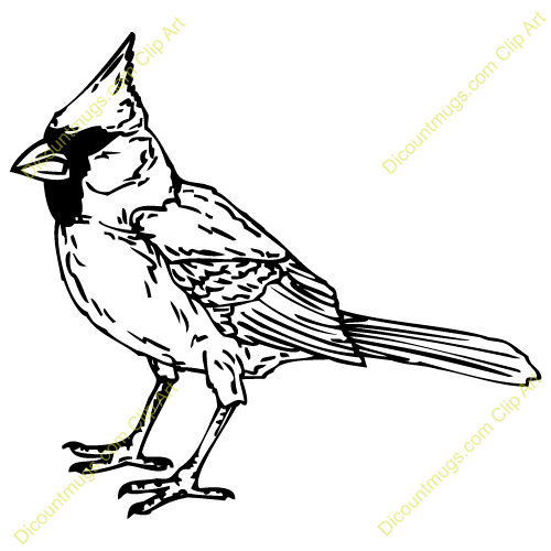 500x500 Cardinal Clipart Black And White