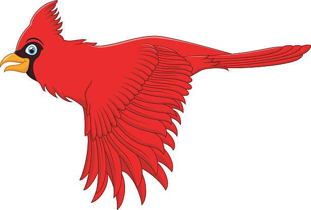 612x413 Cardinal Clipart Flying