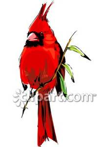 225x300 Cardinal On Branch Clip Art Cliparts