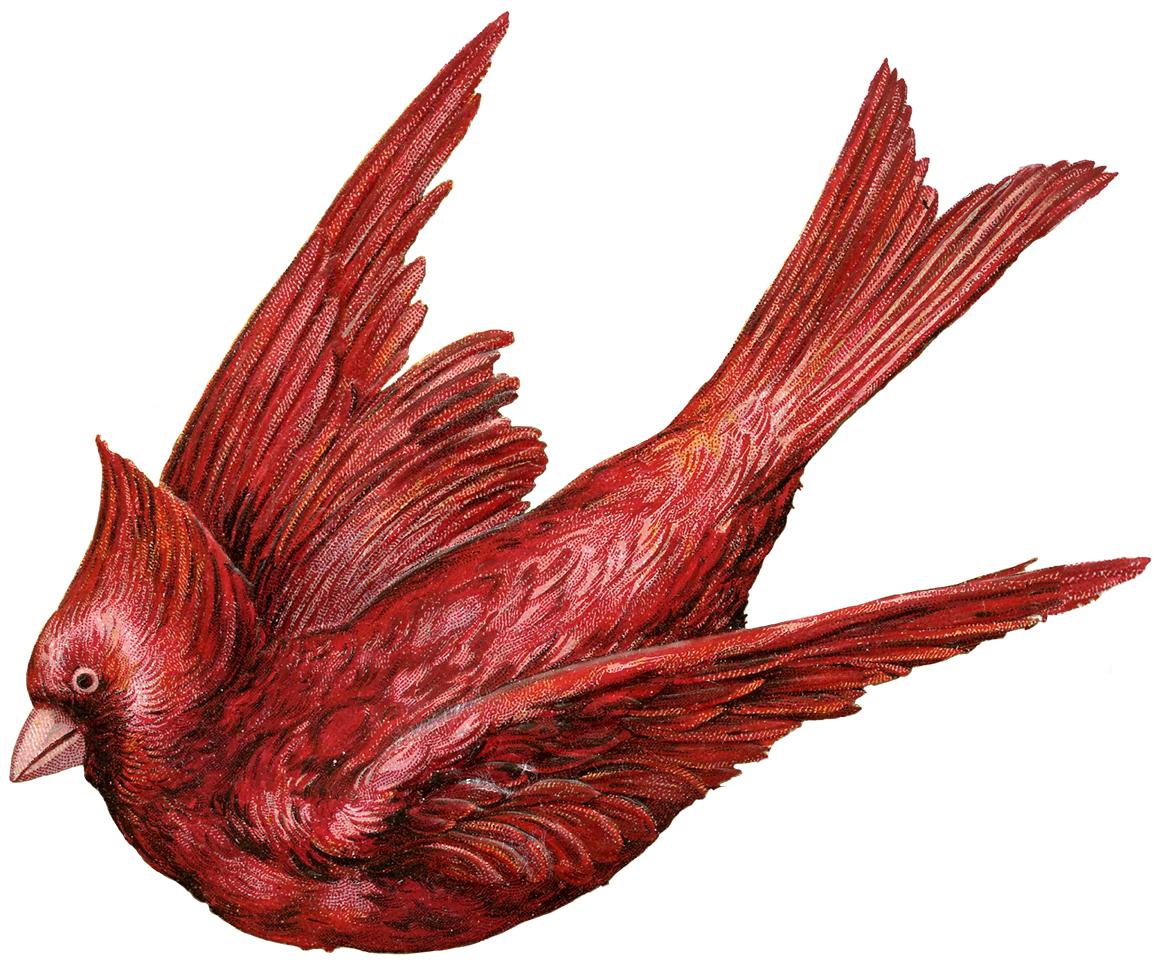 1158x970 Cardinal Bird Clip Art