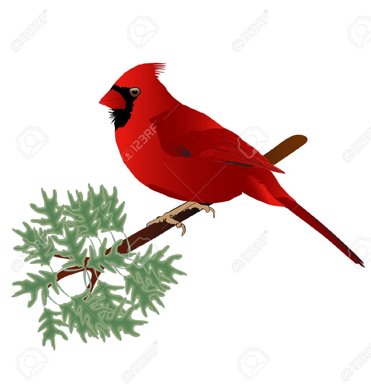 1234x1300 Cardinal Bird On Branch Clip Art Cliparts