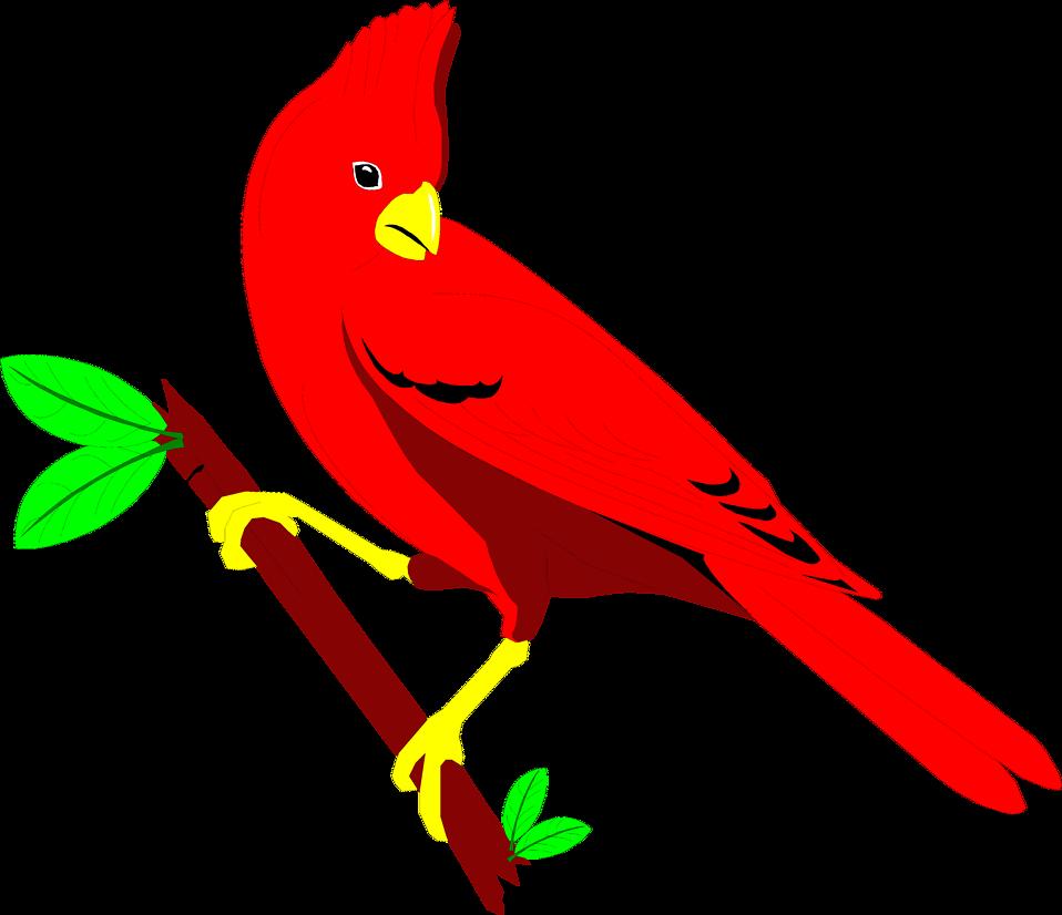 958x826 Cardinal Free Stock Photo Illustration Of A Red Cardinal