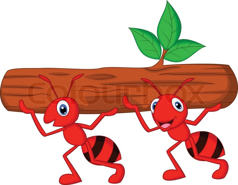 800x622 Vector Illustration Of Team Of Ants Cartoon Carries Log Stock