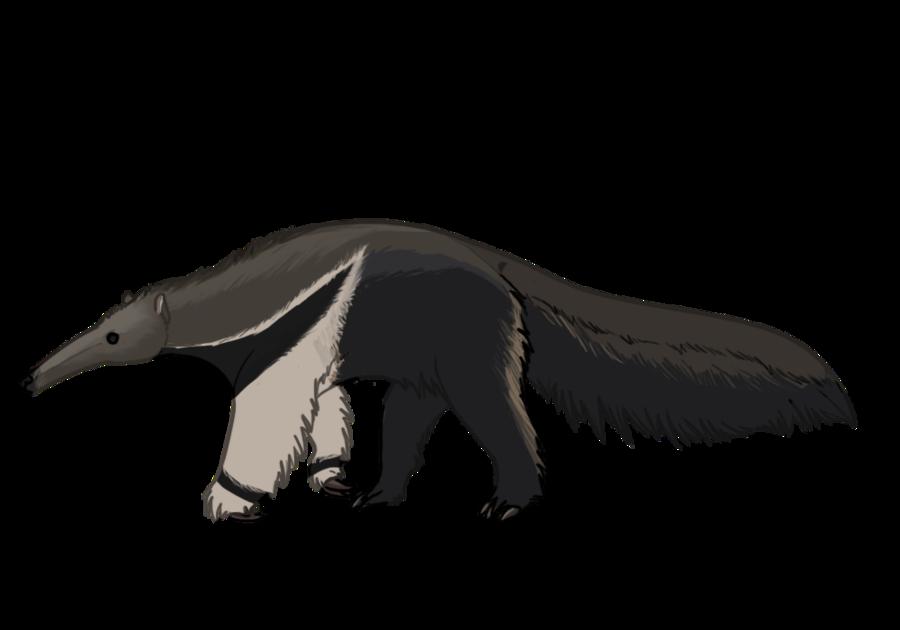 900x630 Giant Anteater By Desertdruid