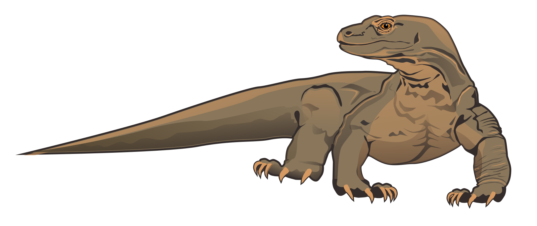 1819x768 Bearded Dragon Clipart Cartoon