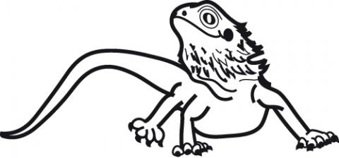480x224 Bearded Dragon Clipart Cute