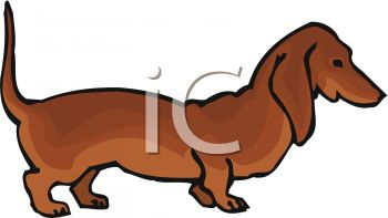 350x197 Breed Of Dog Dachshund