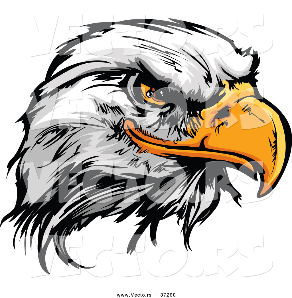 1024x1044 Vector Of A Fearless Cartoon Styled Bald Eagle Mascot Head By