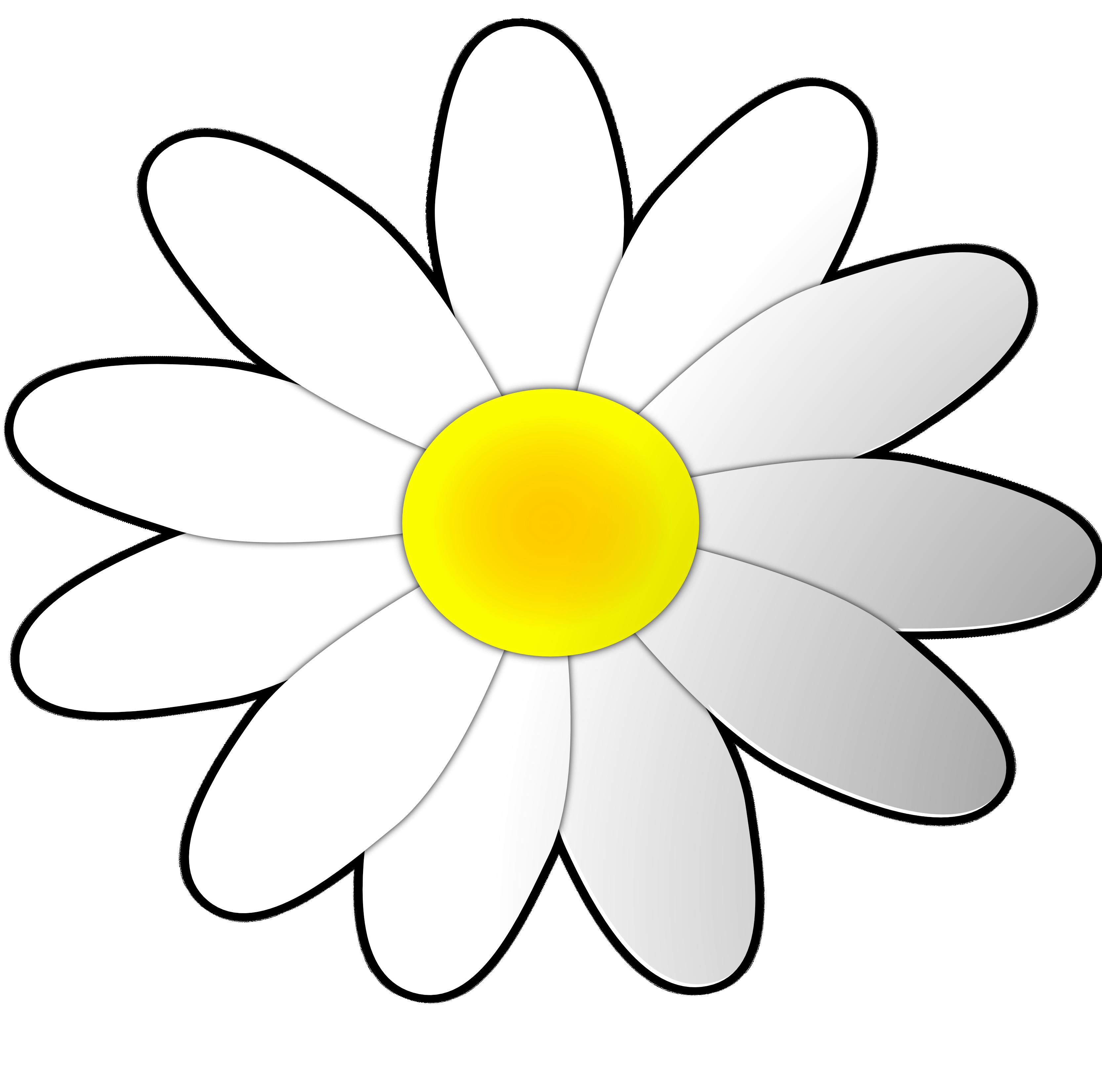 3333x3304 White Flower Clipart