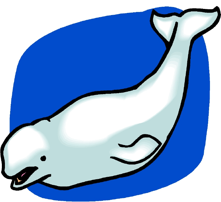 Cartoon Humpback Whale Clipart   Free download best ...