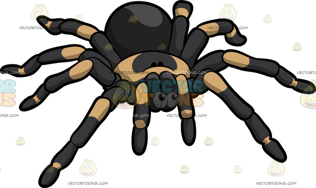Cartoon Images Of Spiders
