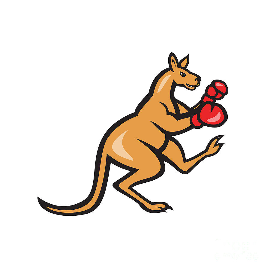 900x900 Kangaroo Kick Boxer Boxing Cartoon Digital Art By Aloysius Patrimonio
