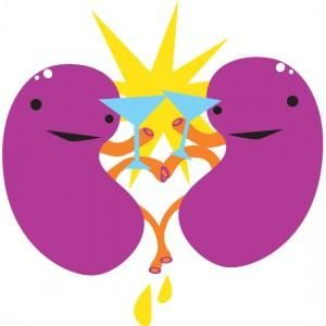 Cartoon Kidney Clipart