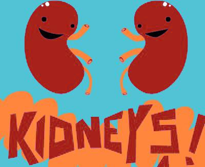 400x326 Fun Clipart Kidney