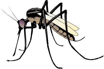 358x240 Mosquito Clipart Cartoon