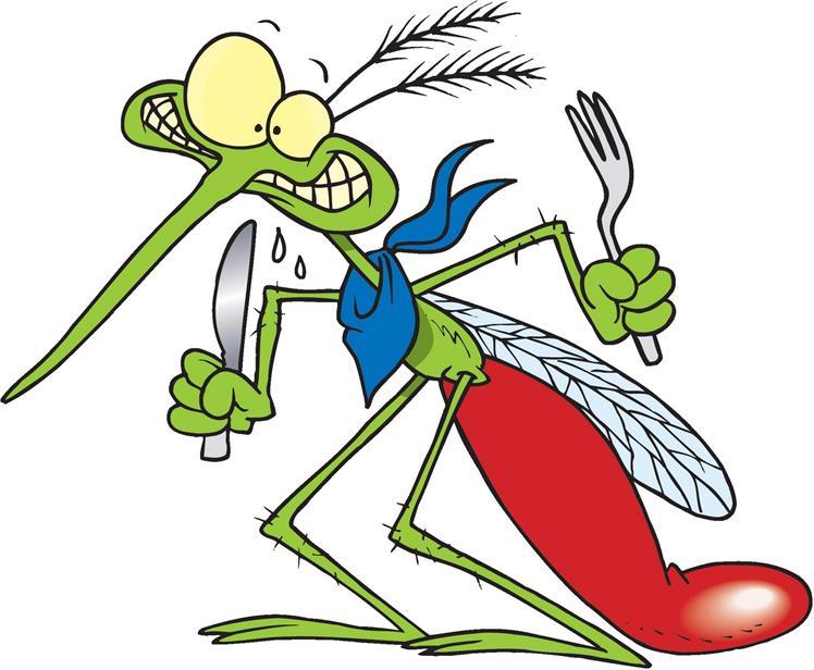 748x616 Mosquito Clipart Microsoft