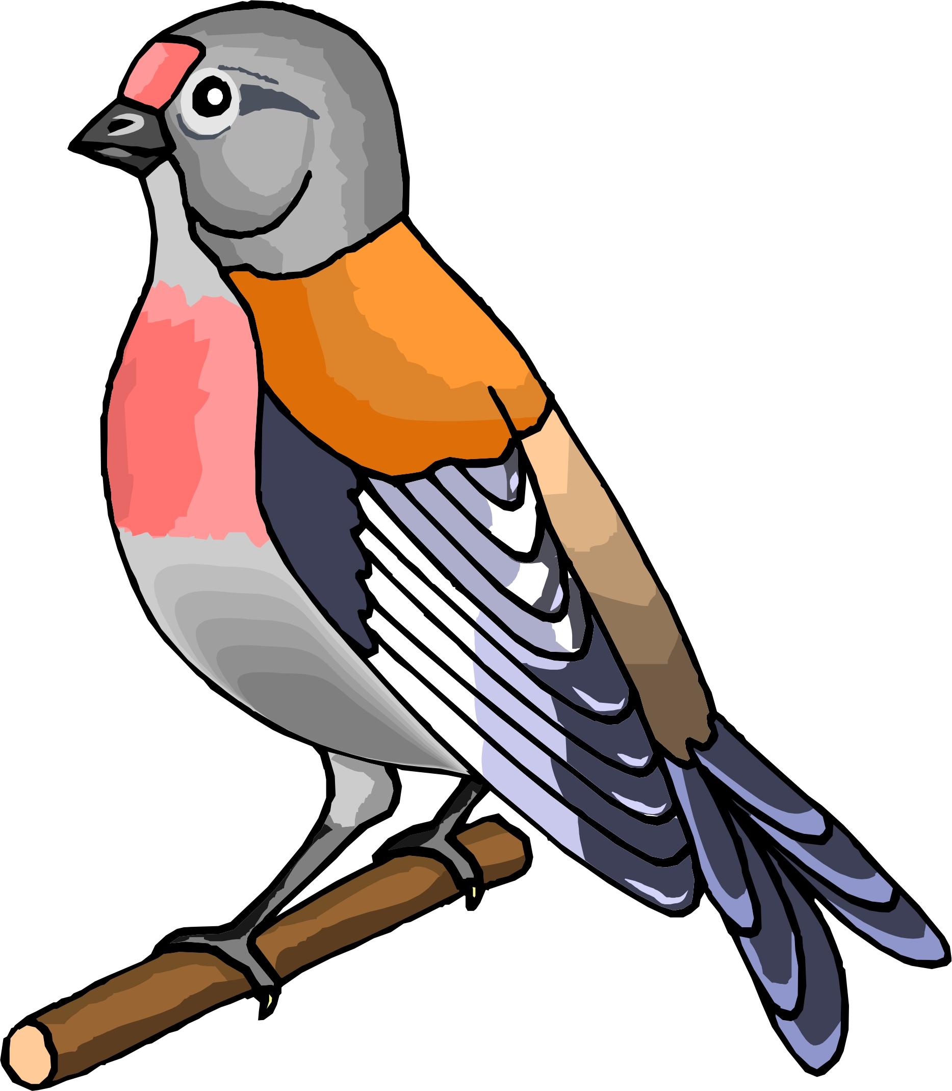 1867x2139 Pics Of Cartoon Birds